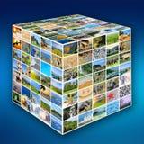 Photo de nature (animal, paysage, plage) Photographie stock libre de droits