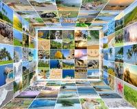 Photo de nature (animal, paysage, plage) Photographie stock