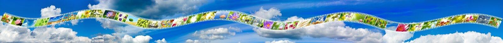 Photo de nature sur la bande de photo contre le plan rapproché de ciel Image libre de droits