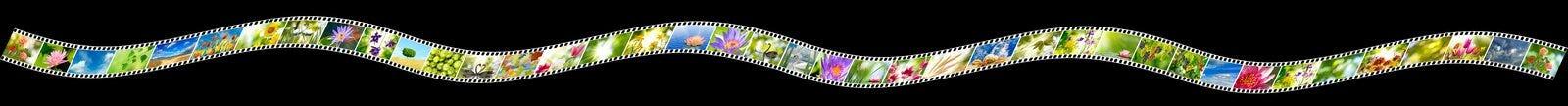 Photo de nature sur la bande de photo sur un fond noir Image libre de droits