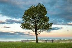 Photo de paysage du parc chez le lac Michigan Images libres de droits