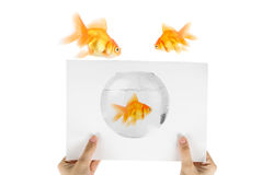 Photo de poissons d'or Photographie stock libre de droits