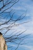 Photo de ramification tendre lumineuse d'un élevage d'arbre Photo stock