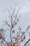 Photo de ramification tendre lumineuse d'un élevage d'arbre Images stock