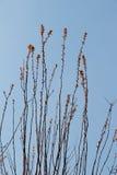 Photo de ramification tendre lumineuse d'un élevage d'arbre Image stock