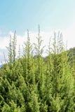 Photo de ramification tendre lumineuse d'un élevage d'arbre Images libres de droits