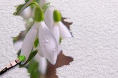 Photo de ressort avec le perce-neige. Photographie stock