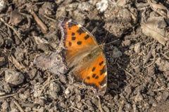 Photo de ressort de papillon photos libres de droits