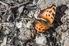 Photo de ressort de papillon photographie stock libre de droits