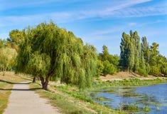 Photo de saule et de chemin à la banque de l'étang Photo libre de droits