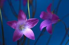 Photo de studio de fleur colorée Images libres de droits