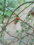 Photo de veg photographie stock