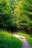 Photo de vieux arbres avec la route dans une forêt verte Photos stock