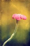 Photo de vintage d'un wildflower Image libre de droits