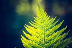 Photo de vintage de belles feuilles de fougère Photographie stock