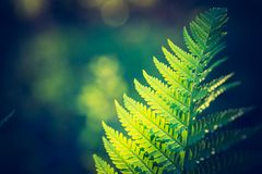 Photo de vintage de belles feuilles de fougère Image libre de droits
