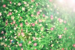 Photo de vintage de fond rose de fleurs sauvages Photos libres de droits