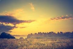 Photo de vintage de paysage vibrant avec le pré brumeux photographie stock libre de droits