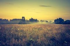 Photo de vintage de paysage vibrant avec le pré brumeux image stock