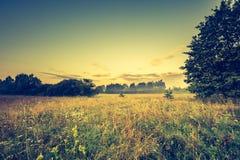 Photo de vintage de paysage vibrant avec le pré brumeux images libres de droits