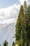 Photo de zone montagneuse pittoresque avec les arbres et le ciel nuageux Photo libre de droits