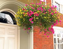 Beautiful delicate summer flowers in hanging basket. Photo of delicate summer pink and yellow flowers in hanging basket outside a georgian property in kent royalty free stock photography
