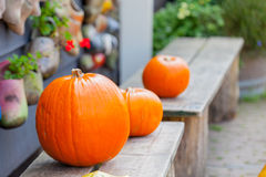 Photo of delicious orange pumpkins of different sizes on the woo Stock Image