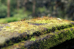 Photo depicting a bright green moss on an old stone in a rainforest of Bali island. Closeup of moss in a jungle. Stock Photos
