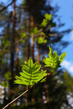 Photo depicting a macro spring view of the tree brunch with fat Stock Photo
