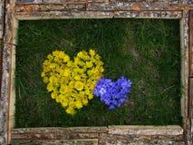 Photo des fleurs jaunes et bleues Photographie stock