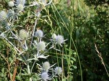 Photo des fleurs sauvages Image libre de droits