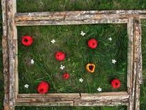 Photo des fleurs sur le fond de l'herbe Photographie stock libre de droits