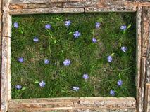 Photo des fleurs sur le fond de l'herbe Image stock
