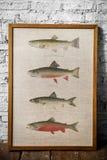 Photo des poissons de dessin de main dans un cadre Photos stock