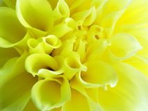 Yellow abstract flower Royalty Free Stock Photo