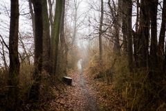 Photo of Dirt Pathway Between Trees Stock Photo