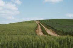 Dirt road across wheat field. Photo of Dirt road across wheat field stock photography