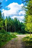 Photo of dirt road in forest in Carpathian mountains Stock Photo