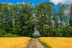 Photo of dirt road on wheat field with trees and sky at summer stock photography