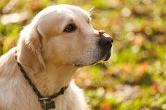 Photo of dog close up Stock Image