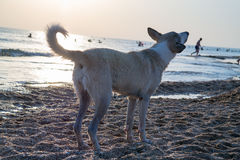 Photo of a dog in the rays of the setting sun on the seashore royalty free stock photo