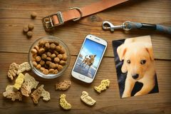 Photo of the dog in the smartphone - dog food - collar and leash. Vertical - closeup royalty free stock photography