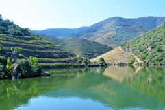 The vineyards and the river. Photo of Douro river and the vineyards- Trás-os-Montes and Alto Douro Province - Portugal - September 2014 stock photos