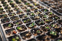 Planting For A New Garden 2. Photo of dozens of planting trays all containing different types of plants stock image