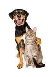 Photo drôle de chien avec le bras autour du chat Image libre de droits