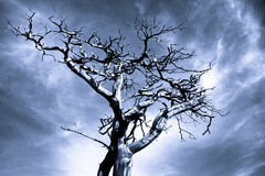 Photo dramatique d'un arbre mort Image stock