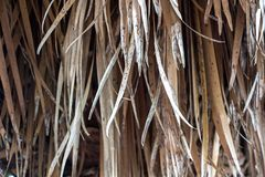 Photo of dried palm leaves Royalty Free Stock Photo