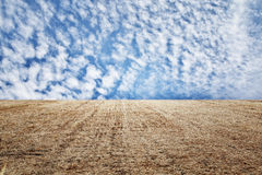 Photo of dry wheat straw field and blue sky horizon line Stock Images