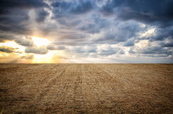 Photo of dry wheat straw field and sunset sky horizon line Royalty Free Stock Images