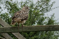 Photo of an Eagle owl Stock Photos